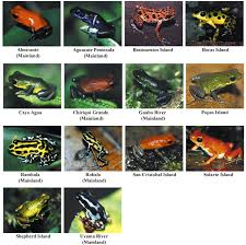 interspecific and intraspecific views of color signals in the