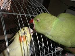 Parrot Meme - create meme when parrot reluctantly sdet in a cage when parrot