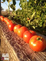gardening tips best 25 arizona gardening ideas only on pinterest desert