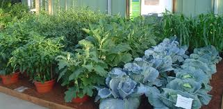 Patio Vegetable Garden Ideas Potted Vegetable Garden Ideas Images Ideas For Potted Vegetable
