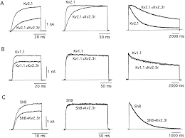 identification and functional characterization of a k channel α