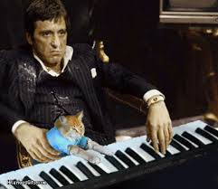 Keyboard Cat Meme - al pacino with keyboard cat hilariousgifs com