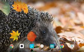 halloween kitten wallpaper cute autumn live wallpaper android apps on google play