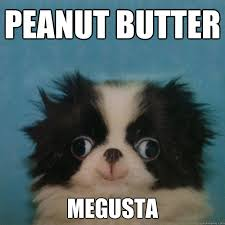 Puppy Memes - megusta puppy memes quickmeme
