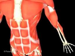 Anatomy And Physiology Human Body 126 Best Education Anatomy Physiology Images On Pinterest Eye