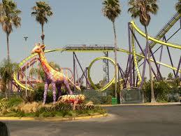 Six Flags Dolphin Swim Six Flags Discovery Kingdom Theme Park In California Thousand