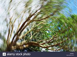 hawaii oahu spinning effect on tree stock photo royalty