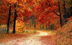season autumn wallpapers 48 hd season autumn wallpapers