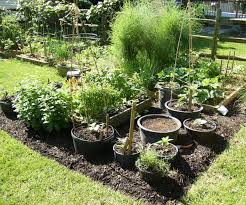 riveting container garden ideas container gardening container