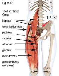 Picture Of Human Knee Muscles Your Hip Flexors And Hamstrings U2013 Lowbackpainprogram