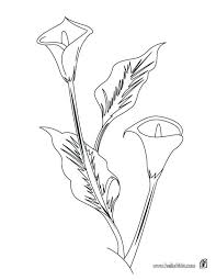 northern mockingbird coloring page texas you print arum lily color