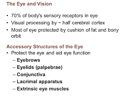 Anatomy Of Human Eye Ppt Human Anatomy U0026 Physiology Ninth Edition Powerpoint Lecture