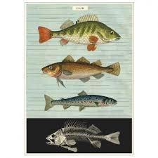 cavallini poster cavallini vintage school poster fish kado in huis