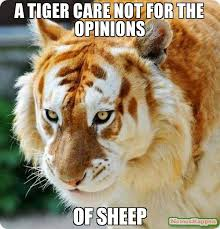 Tiger Meme - a tiger care not for the opinions of sheep meme big cat 55617