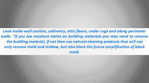 how to remove mold housekeeping tips how to remove mold from