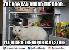 White Cat Meme - white cat memes funny cute angry grumpy cats memes pinterest