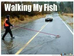 Funny Fishing Memes - i can has cheezburger fish funny animals online cheezburger