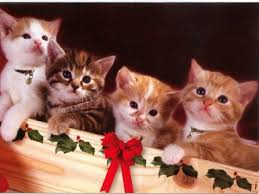 65 best cats vintage images on vintage
