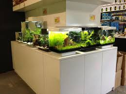 Fluval Edge Aquascape Fluval Edge Shop Displays Page 2 Uk Aquatic Plant Society