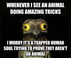 Fact Frog Meme - small fact frog rebrn com