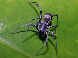 unusual spider wallpaper