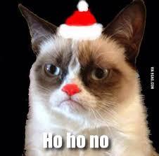 Grumpy Cat Christmas Memes - 70 best grumpy cat at christmas images on pinterest grumpy cat