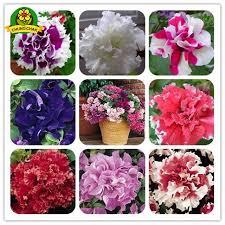 Free Shipping Flowers Aliexpress Com Buy Flowers Seeds Free Shipping 300pcs Seeds Pan