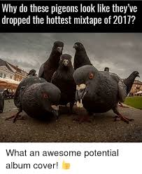 Album Cover Meme - why do these pigeons look like they ve dropped the hottest mixtape
