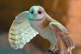 Barn Owl Photography Browse Birds Photography Deviantart
