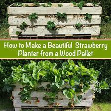 strawberry pallet garden ideas photograph strawberry palle