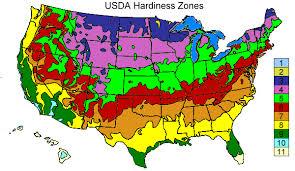 Gardening Zones Usa - hardy golden trumpet tree growers inc ocoee fl 34761 407 209 4747