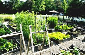 vegetable garden ideas what to plant in eye backyard vegetable