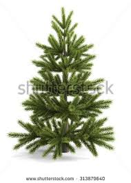 tree without ornaments stock images royalty free images
