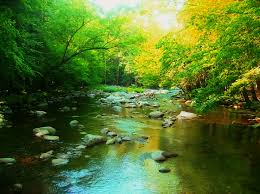 Tennessee forest images Tennessee forest by commandersozo jpg