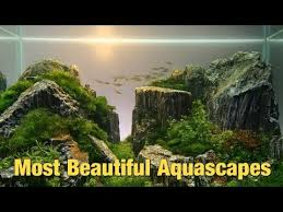 Most Beautiful Aquascapes Most Beautiful Aquascapes Youtube