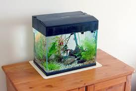 Small Tank Aquascaping Aquascaping 1 U2013 Jo Fox U2013 Adventures In Art
