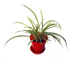8 dog and cat safe plants to supercharge the air you breathe