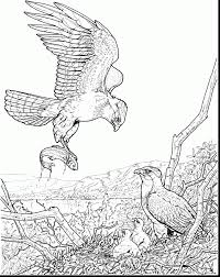 incredible american eagle coloring page with eagle coloring page