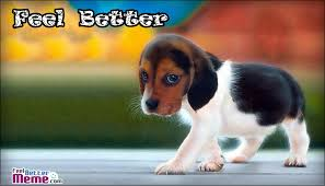 Feel Better Meme - better dog meme