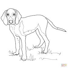 american foxhound coloring page free printable coloring pages