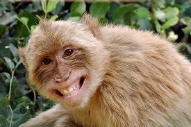 маймуната опасна за човека