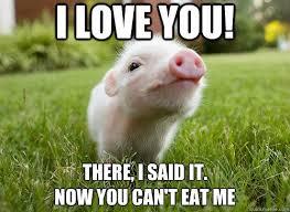 Wanna Bet Meme - awww wanna bet truthful humor pinterest animal funny