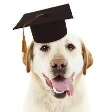 dog graduation cap adorable dog with black graduation cap on white background wag