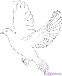 how to draw a dove step by step birds animals free online