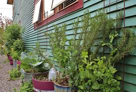 staggering container vegetable gardening decorating ideas images
