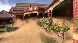 tumbleweed invades australian town cnn video