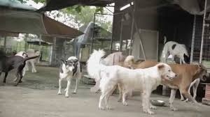 ikea dogs home for hope youtube
