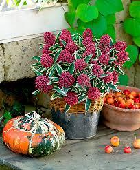 bulb garden layout online gardening bakker com buy flowerbulbs and plants online