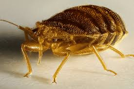 bed bug exterminator las vegas get rid of bed bugs las vegas hire our bed bug control specialists