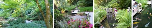 iconic gardens of portland oregon the rose garden japanese